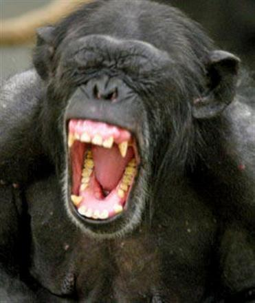 Chimp Attacks!